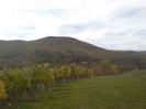 Kilátás a panzióra a szőlőbirtokról